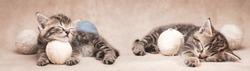 Two tabby kittens sleeping among balls of yarn.