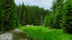Two tents camped in a green glade along which Lotru river flows. The hole scenery is completed by dense fir and spruce forests. Parang massif, Carpathian Mountains, Romania.