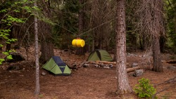 Two tents camping in a pine terrain with a yellow bear proof canister hanging from the trees