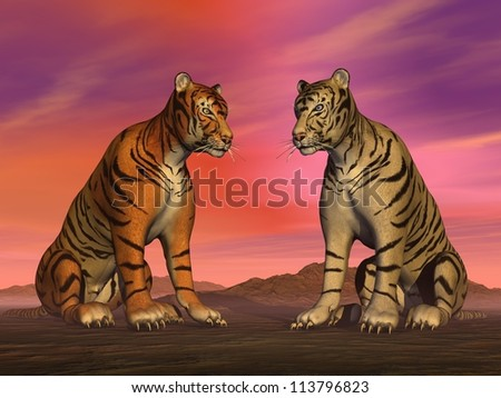 Two tigers, orange and white, sitting face to face in the desert by sunset colorful sky - stock photo