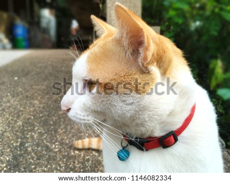 Stock Photo Two tone cat (white and orange) with red collar and blue small bell looking to the left side of photo with serious posture or bored look on blur background