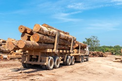 Two trailer truck (road train) loaded with wood logs extracted from an area of brazilian Amazon forest.