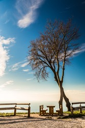 two trees and a bench on the top of the bay of Trieste