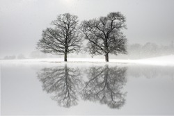 Two trees in a snow covered field with reflections in a lake