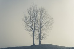 Two trees on a small hill on a misty day