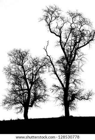 two trees on a white background - black and white shot