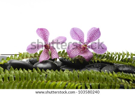Two tropical orchid with green fern on black stones