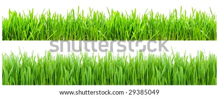Two types of green grass on white background