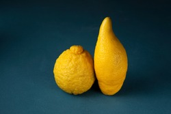 Two ugly lemons in a row on a dark blue textured background. Lumpy and elongated. Closeup. The concept is food waste reduction. Eating ugly or deformed fruits and vegetables. Copy space.