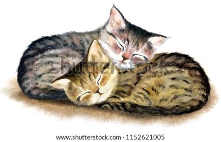 Two сute sleeping tabby kittens. Hand drawn watercolor.