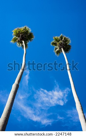 Two very tall palm trees against a blue sky