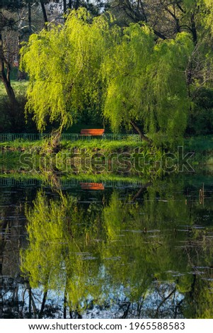 Two Weeping Willows and a Bench Beautifully Reflected onto the Lake Surface on a Sunny Spring Morning Stock photo ©