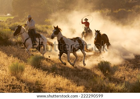Two western cowboys riding horses, roping wild horses