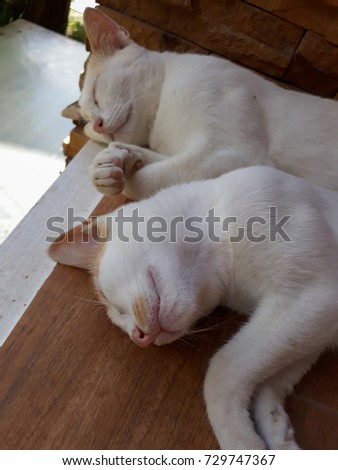 Two white cats are lying on a wooden floor. - Shutterstock ID 729747367