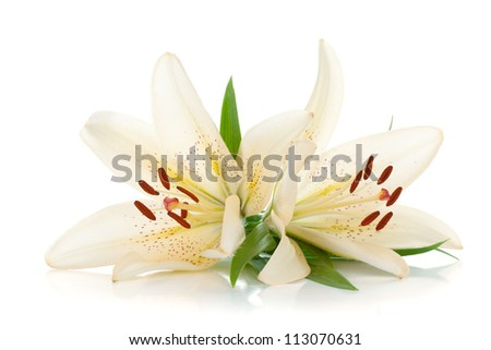 Two white lily. Isolated on white background