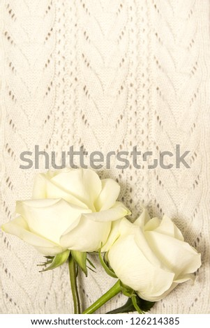 Two white roses over knitted texture. Love and valentine concept.