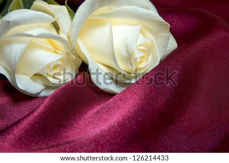 Two white roses over purple silk texture. Love and valentine concept.
