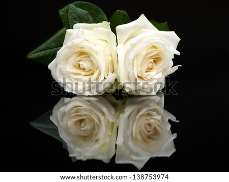 Two white roses with mirror image isolated on black