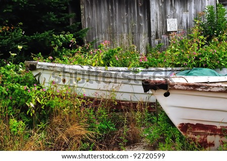 Two white rowboats or dories in tall grass