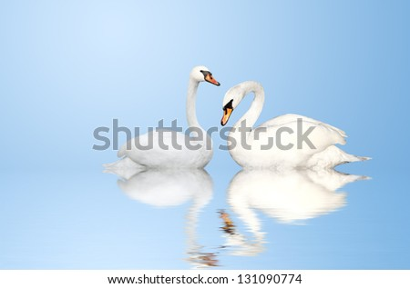 Two white swans on blue background