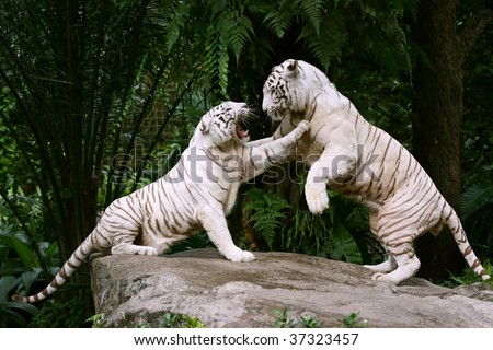 white tiger research paper