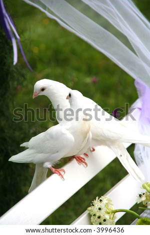 stock photo two white wedding doves on a white bench in a wedding ceremony