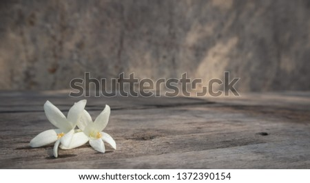 Two whites Millingtonia flowes with water drops on the rough wooden table with the background of rock wall. The close up of Millinhtonia. Copy space for editing. #1372390154