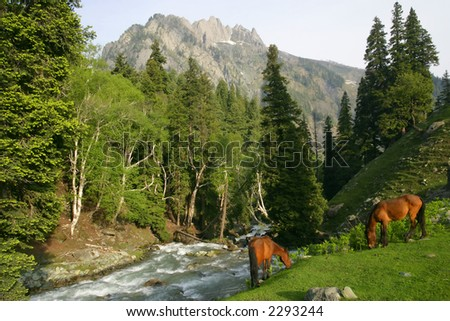Two wild horses grazing beside a river that flows down a mountain in Kashmir.