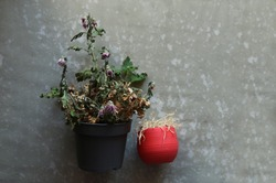 Two wilted plants. Dried indoor flowers in vases, small and large. Dry flowers on a gray surface. The view from the top.