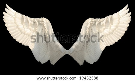 stock photo : two wings isolated
