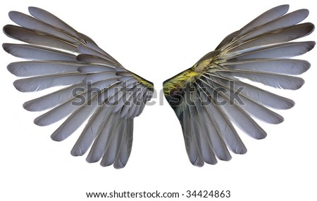 two wings isolated on white background #34424863