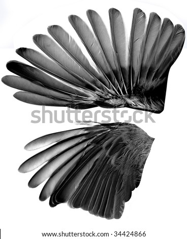 two wings isolated on white background #34424866