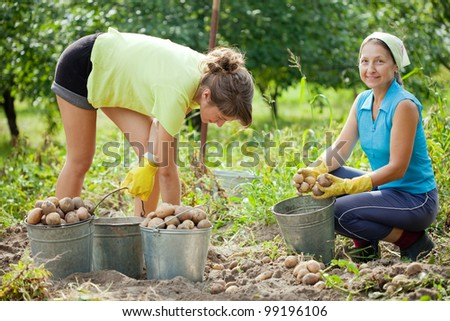 Two women harvesting potatoes in field