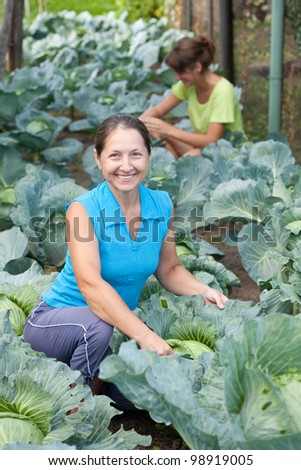 Two women  in plant of cabbage