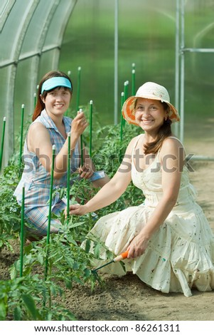 Two women prongs tomato plant at hothouse