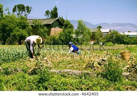 two women working in farm