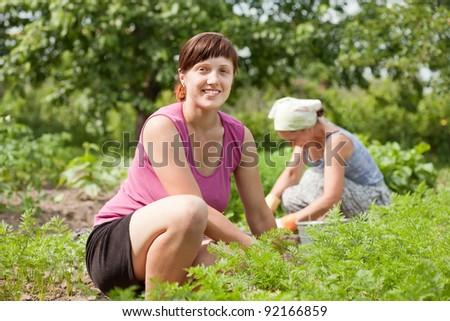 Two women working in field of carrot