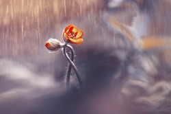 Two woven spring flower in the rain in a forest in spring close-up with soft focus. The romantic image of love, spring bloom wallpaper border template card for design