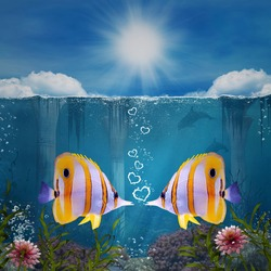 Two yellow fishes in love