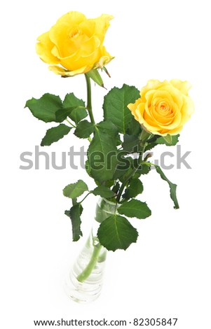 Two yellow roses in vase on white background
