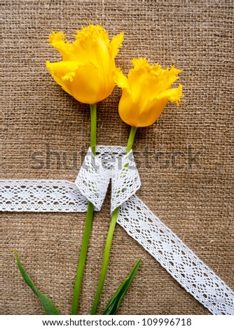 two yellow tulips on sacking cloth