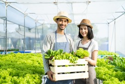 Two young Asian couple farmers working in vegetables hydroponic farm with happiness. Portrait of man and woman farmer carrying box of green salads looking at camera with smile in the green house farm.
