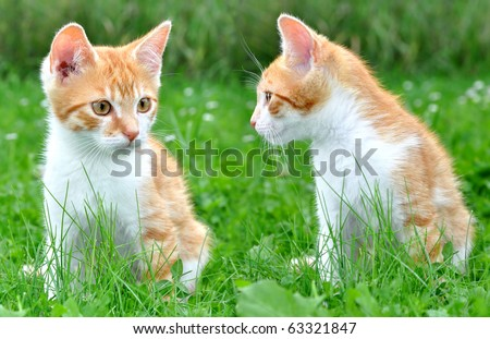 Two young cats in the grass - stock photo