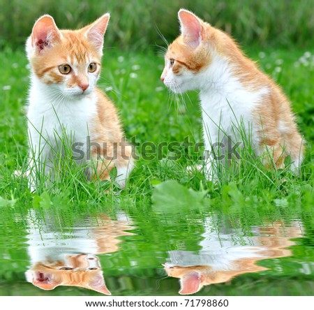 Two young cats in the grass