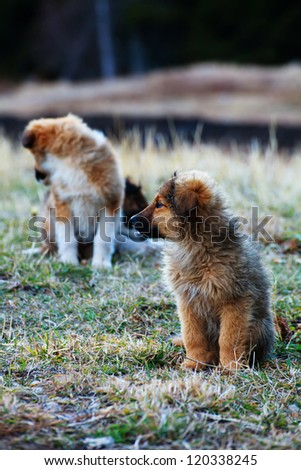 two young cute dog in green grass