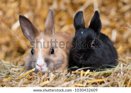 Two young dwarf rabbit sitting side by side