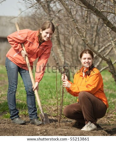 Two young women making orchard with spade and sprouts  in spring
