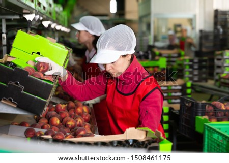 Two young women working on producing sorting line at fruit warehouse, preparing peaches for packaging