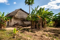 Typical african house made of mud and mudbrick with thatched roof, surrounded by palm and banana trees and small agriculture field on Pemba Island, Tanzania.