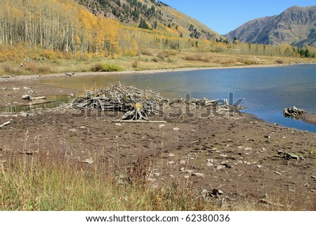 Typical; beaver dam on a lake in the Rocky Mountains in Colorado - stock photo